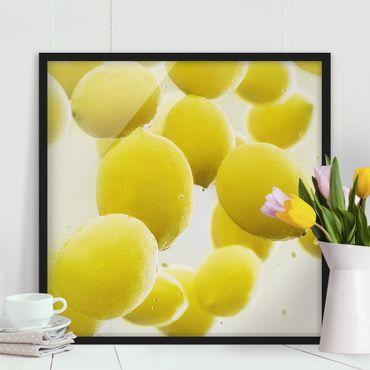 Bild mit Rahmen - Zitronen im Wasser - Quadrat 1:1