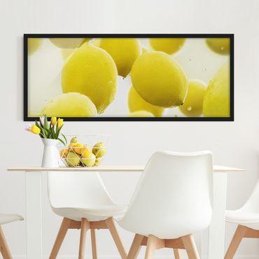 Bild mit Rahmen - Zitronen im Wasser - Panorama Querformat