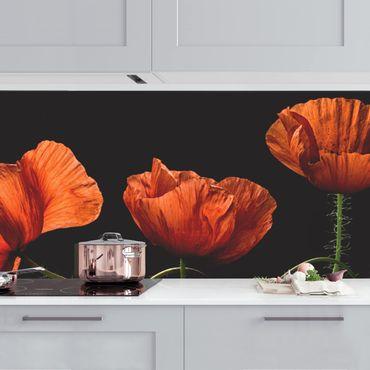 Küchenrückwand - Mohnblumen um Mitternacht