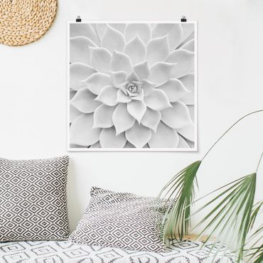 Poster - Kaktus Sukkulente - Quadrat 1:1