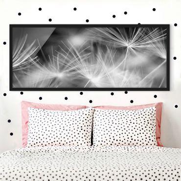 Bild mit Rahmen - Bewegte Pusteblumen Nahaufnahme auf schwarzem Hintergrund - Panorama Querformat