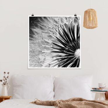 Poster - Pusteblume Schwarz & Weiß - Quadrat 1:1