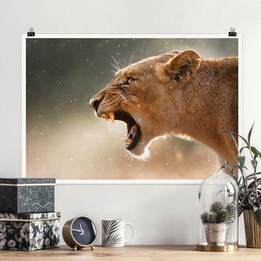 Poster - Löwin auf der Jagd - Querformat 2:3