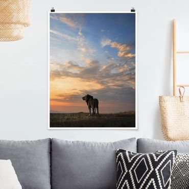 Poster - Löwe im Sonnenuntergang - Hochformat 3:4