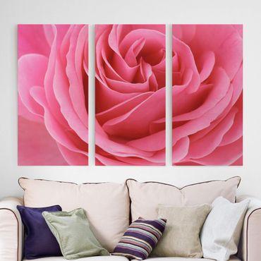 Leinwandbild 3-teilig - Lustful Pink Rose - Hoch 1:2