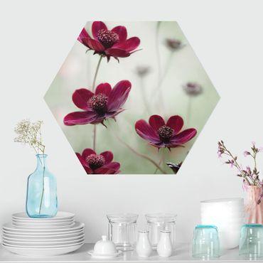 Hexagon Bild Forex - Pinke Kosmeen