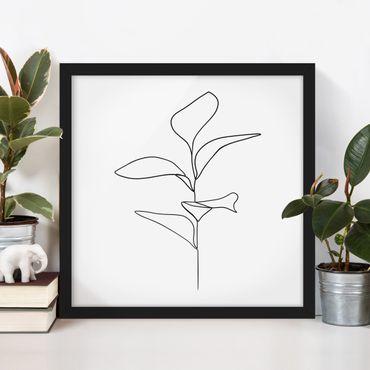 Bild mit Rahmen - Line Art Pflanze Blätter Schwarz Weiß - Quadrat 1:1