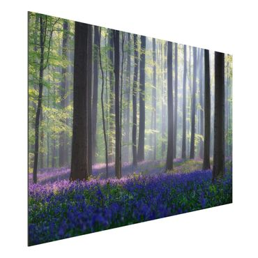 Alu-Dibond Bild - Frühlingstag im Wald
