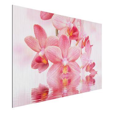 Alu-Dibond Bild - Rosa Orchideen auf Wasser