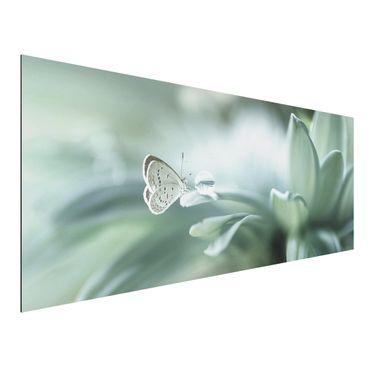 Aluminium Print - Schmetterling und Tautropfen in Pastellgrün - Panorama