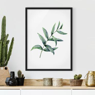 Bild mit Rahmen - Aquarell Eucalyptus I - Hochformat