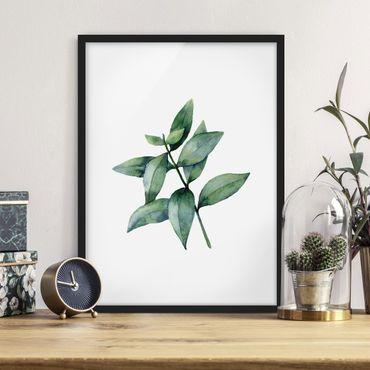 Bild mit Rahmen - Aquarell Eucalyptus III - Hochformat