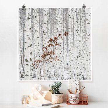 Poster - Birken im Herbst - Quadrat 1:1