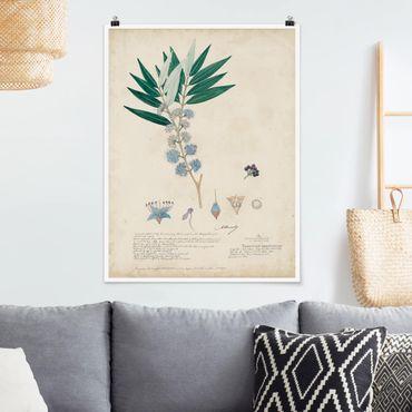 Poster - Schwarzmundgewächse - Angustifolium - Hochformat 3:4