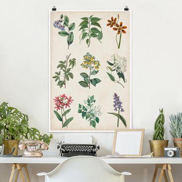 Poster - Botanische Schautafel I - Hochformat 3:2