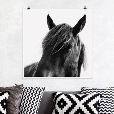 Poster - Neugieriges Pferd - Quadrat 1:1