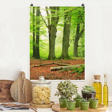 Poster - Mighty Beech Trees - Hochformat 3:4