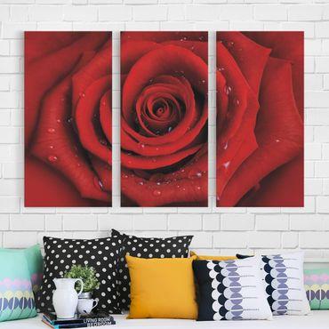 Leinwandbild 3-teilig - Rote Rose mit Wassertropfen - Hoch 1:2