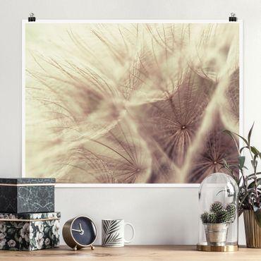 Poster - Detailreiche Pusteblumen Makroaufnahme mit Vintage Blur Effekt - Querformat 3:4