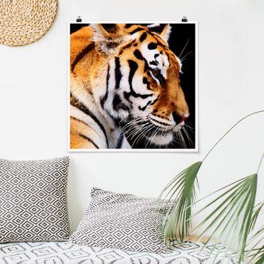 Poster - Tiger Schönheit - Quadrat 1:1