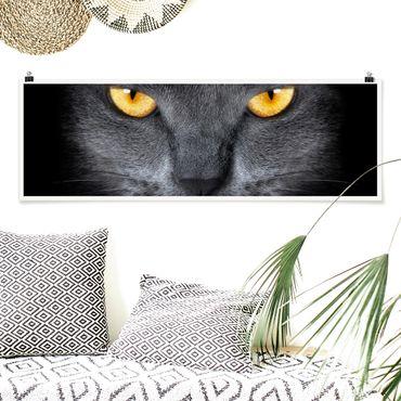Poster - Cats Gaze - Panorama Querformat