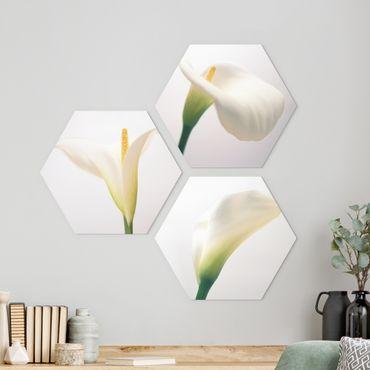 Hexagon Bild Alu-Dibond 3-teilig - Calla Trio