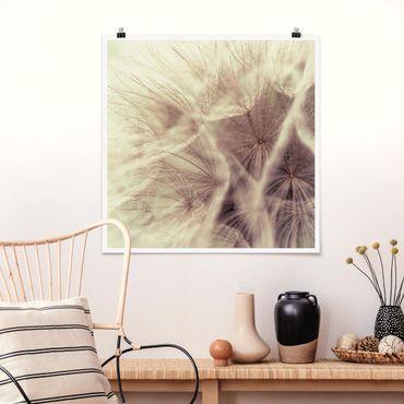Poster - Detailreiche Pusteblumen Makroaufnahme mit Vintage Blur Effekt - Quadrat 1:1