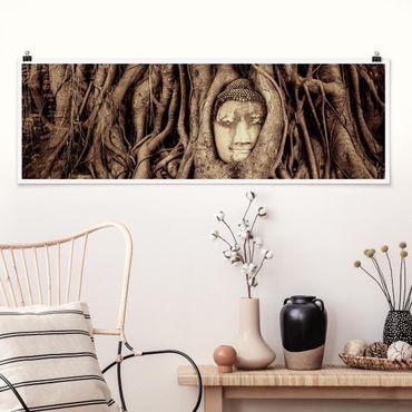 Poster - Buddha in Ayutthaya von Baumwurzeln gesäumt in Braun - Panorama Querformat