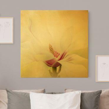 Leinwandbild Gold - Zarte Magnolienblüte - Quadrat 1:1