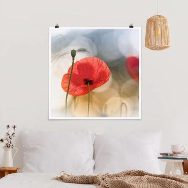 Poster - Mohnblumen am Morgen - Quadrat 1:1
