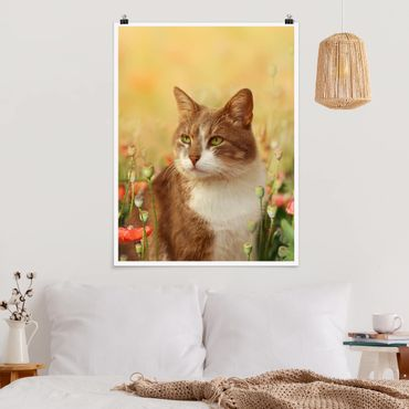 Poster - Katze im Mohnfeld - Hochformat 3:4