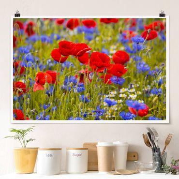 Poster - Sommerwiese mit Mohn und Kornblumen - Querformat 2:3