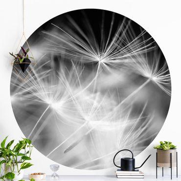 Runde Tapete selbstklebend - Bewegte Pusteblumen Nahaufnahme auf schwarzem Hintergrund