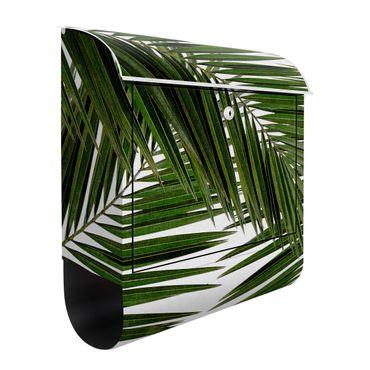 Briefkasten - Blick durch grüne Palmenblätter