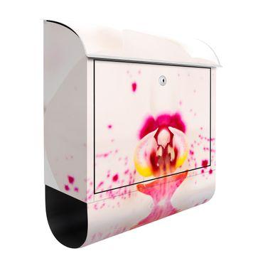 Briefkasten mit Zeitungsfach - Gepunktete Orchidee auf Wasser - Briefkasten Blumen