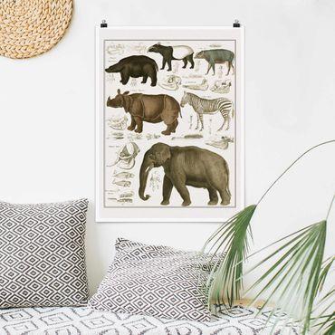 Poster - Vintage Lehrtafel Elefant, Zebra und Nashorn - Hochformat 4:3
