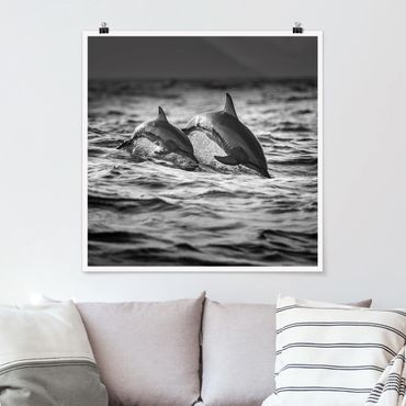 Poster - Zwei springende Delfine - Quadrat 1:1