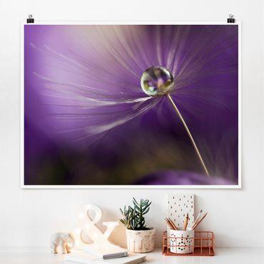 Poster - Pusteblume in Violett - Querformat 3:4