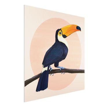 Forex Fine Art Print - Illustration Vogel Tukan Malerei Pastell - Quadrat 1:1