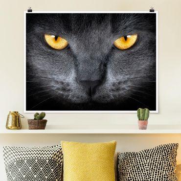 Poster - Cats Gaze - Querformat 3:4