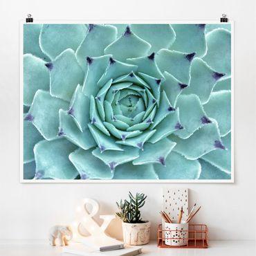 Poster - Kaktus Agave - Querformat 3:4
