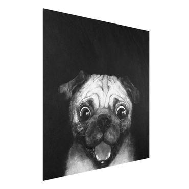 Forex Fine Art Print - Illustration Hund Mops Malerei auf Schwarz Weiß - Quadrat 1:1