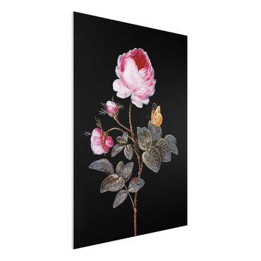Forex Fine Art Print - Barbara Regina Dietzsch - Die hundertblättrige Rose - Hochformat 4:3
