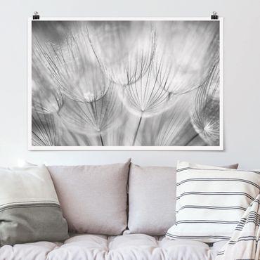 Poster - Pusteblumen Makroaufnahme in schwarz weiß - Querformat 2:3