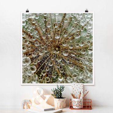 Poster - Pusteblume im Herbst - Quadrat 1:1