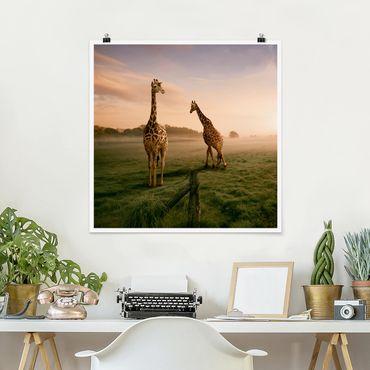 Poster - Surreal Giraffes - Quadrat 1:1