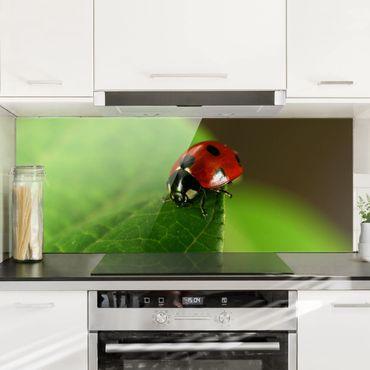 Spritzschutz Glas - Lady Bird - Panorama - 5:2