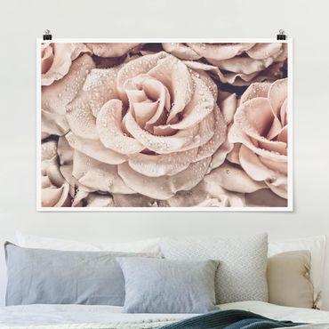 Poster - Rosen Sepia mit Wassertropfen - Querformat 2:3