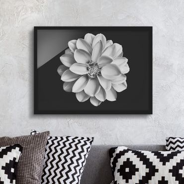 Bild mit Rahmen - Dahlie Schwarz Weiß - Querformat
