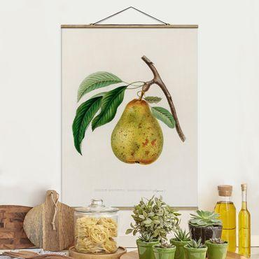 Stoffbild mit Posterleisten - Botanik Vintage Illustration Gelbe Birne - Hochformat 3:4